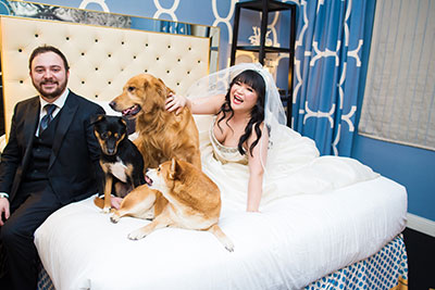 Bride and Groom on bed with multiple dogs