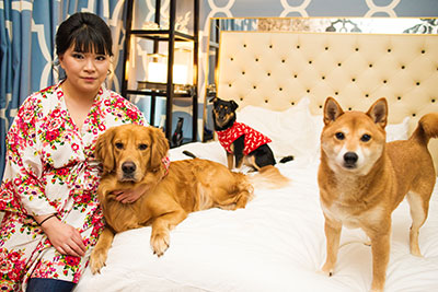 Bride with 3 dogs on hotel bed
